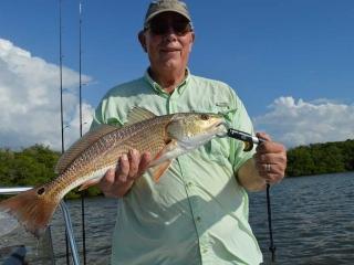 Average Estero Bay Redfish