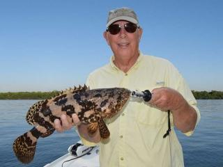 Juvenile Goliath Grouper In Fort Myers